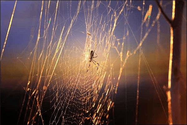 世界上最珍贵的是什么?关于蛛儿与甘露、长风与芝草的故事