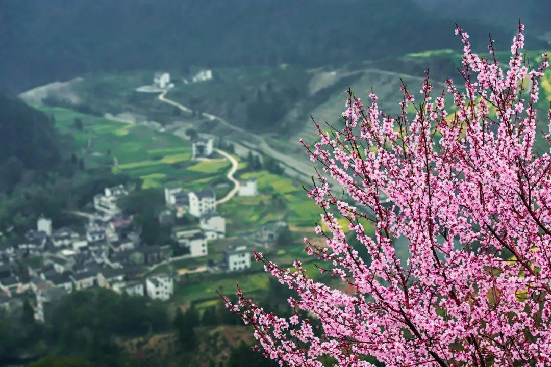 """一到春天,就想去""""徽州""""!"""