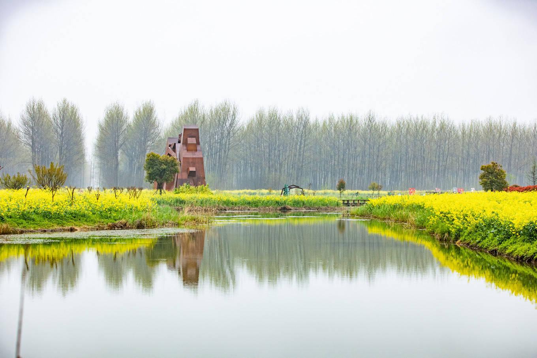 花开赏春趣,带你领略江苏金湖的杉青水秀