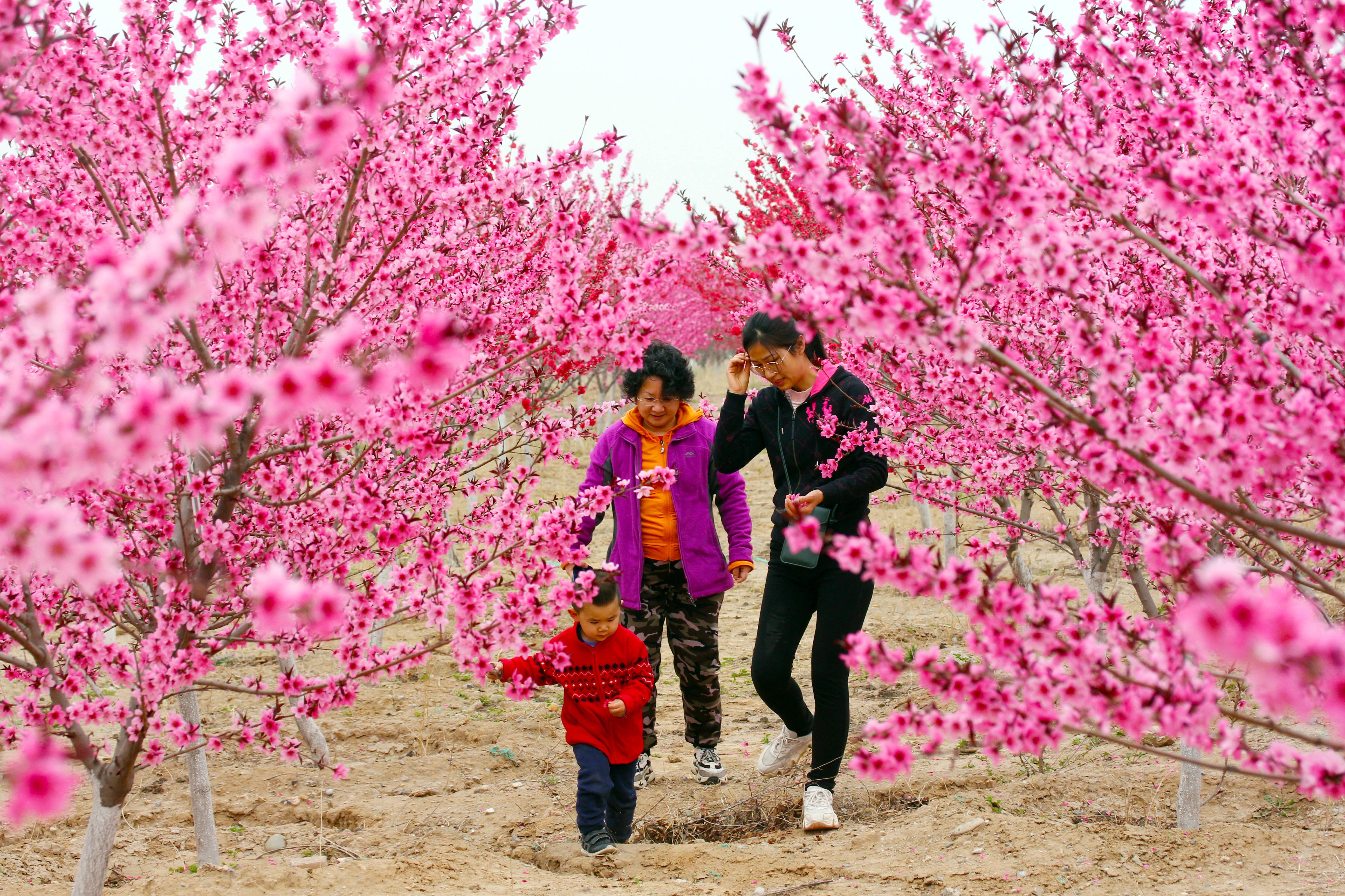 北京五环边有一片桃花源,空无一人似仙境,花开得比公园都美