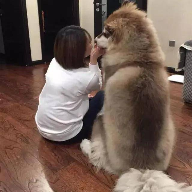 狗狗把空瓶子送给拾荒老人,老人回赠给它一个玩具