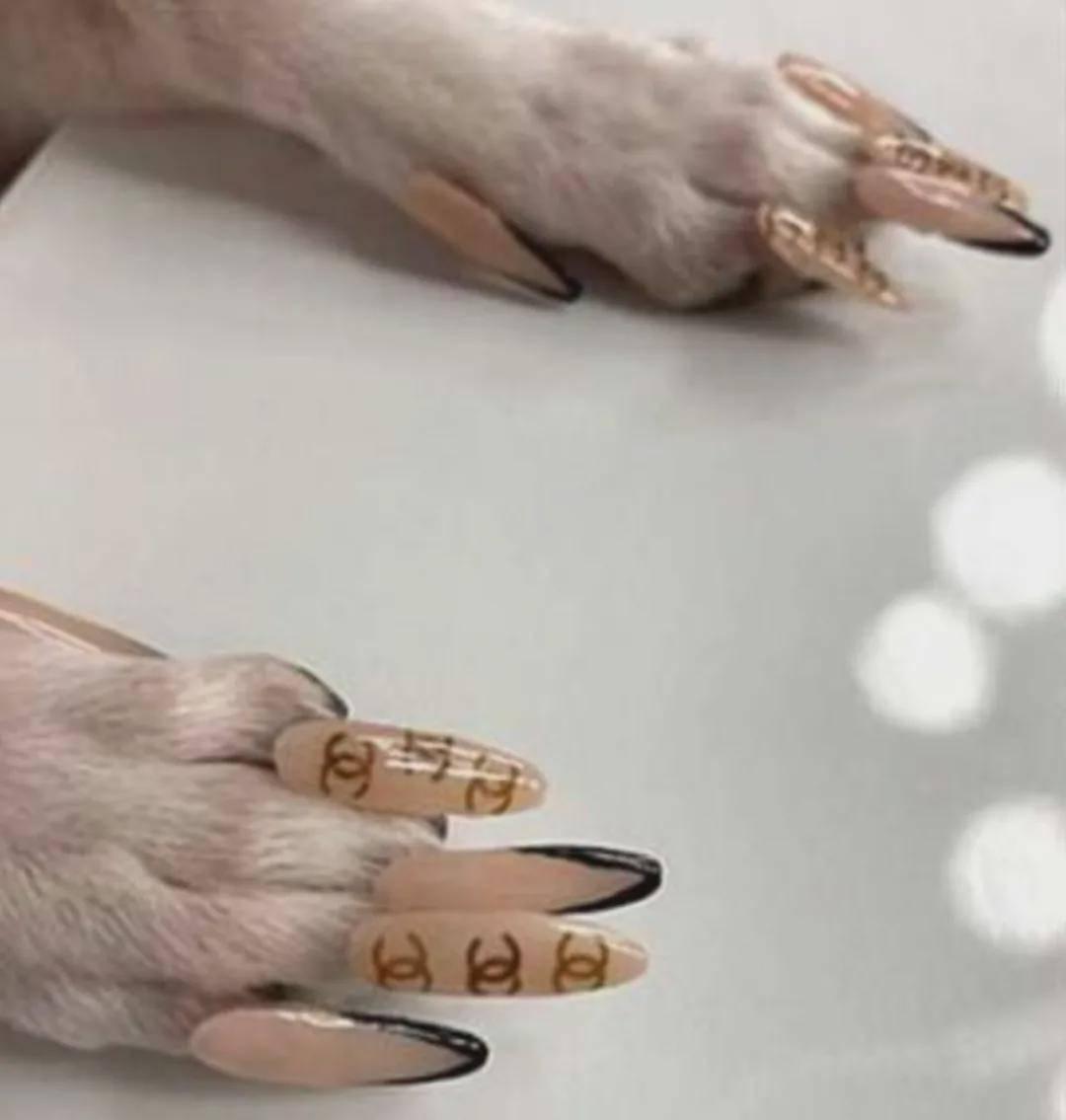 网红带狗直播,吸引2000万人观看,网友却说:这就是虐狗