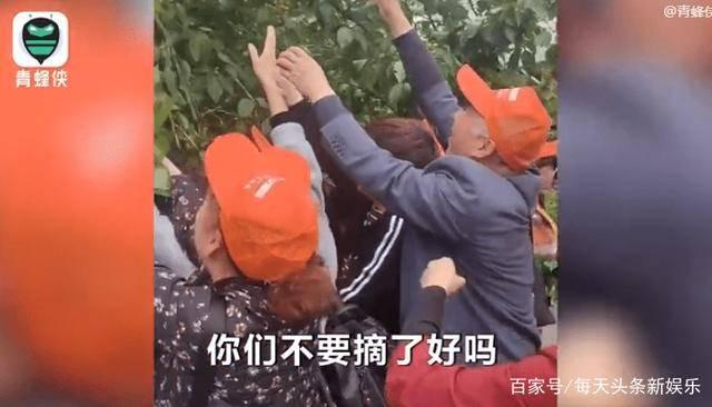 天门山景区游客、暴力采摘果子、多数为老年人  第1张
