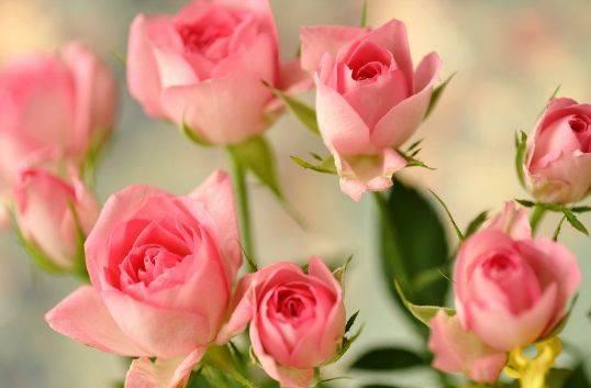 心理测试:选出你最喜欢的玫瑰,测你是越长越漂亮还是越长越丑?  第3张