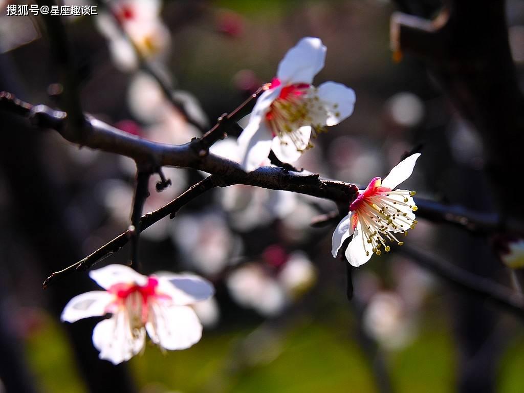 5月1日爱情运势:桃花敲门,情真意切的四大星座  第2张