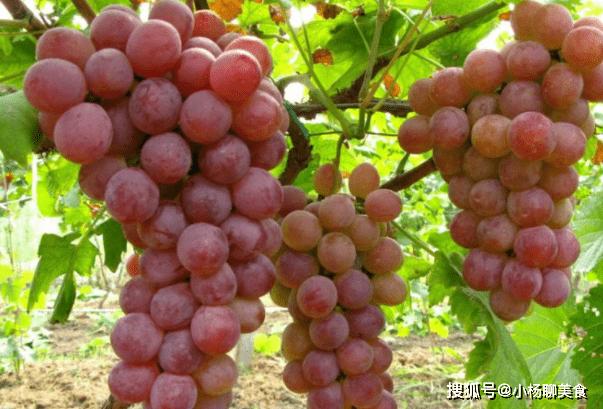 提个醒:葡萄与它搭配,就是没病找病,可还有人偏偏喜欢!