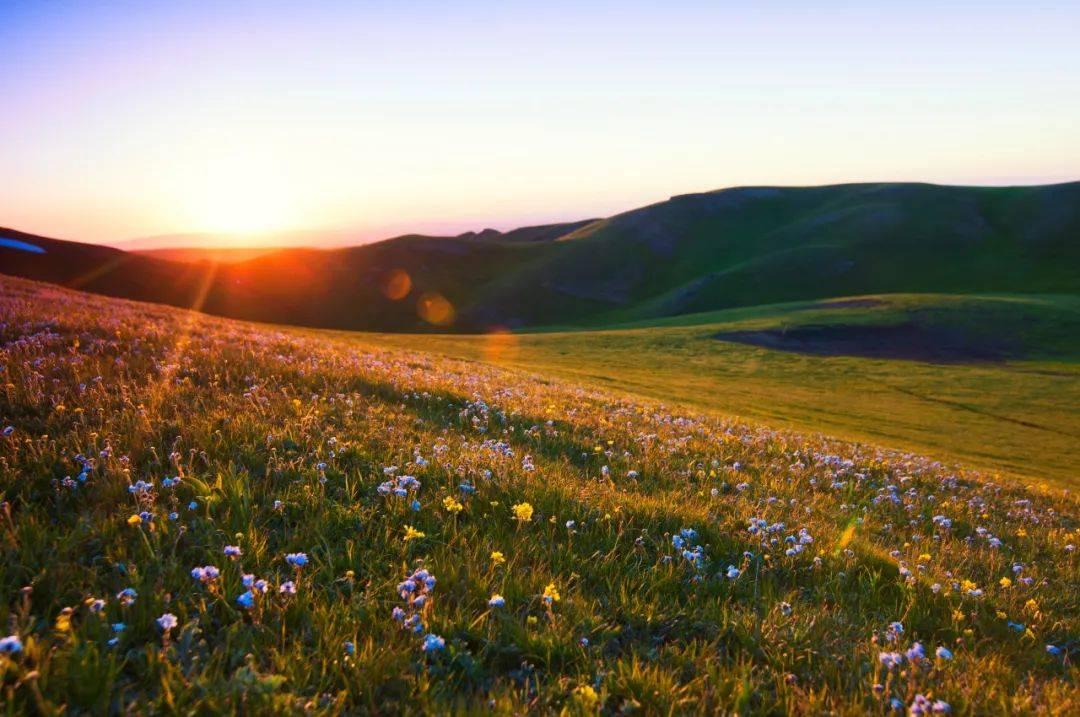 不输呼伦贝尔,媲美江布拉克,一路看尽荒漠戈壁和草原花海!