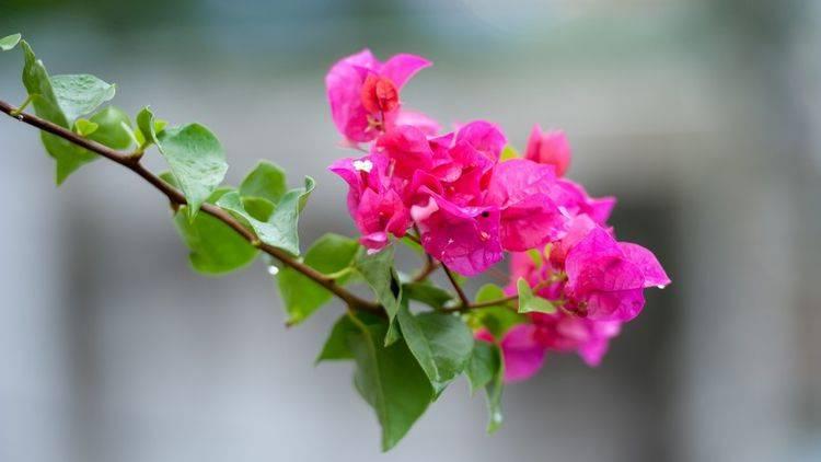 下个月,桃花绽放,月老赐姻缘,将永结连理缘定三生的4大星座