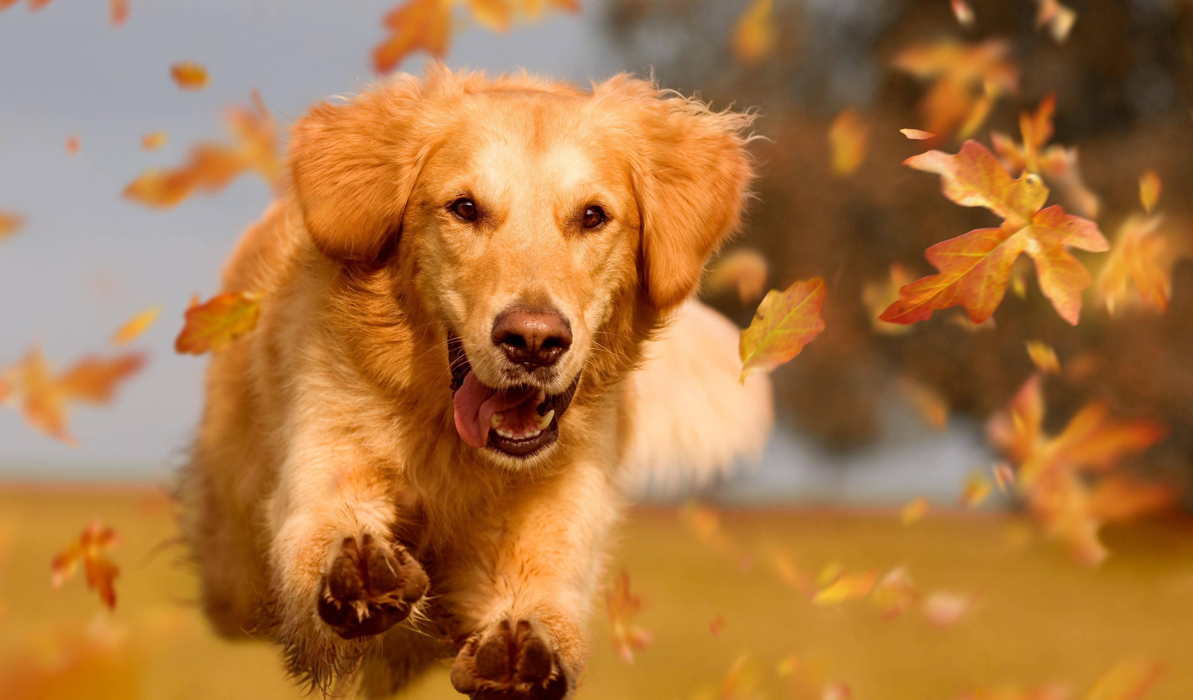 像狗一样的跪在主人前 还不像条狗一样爬过来