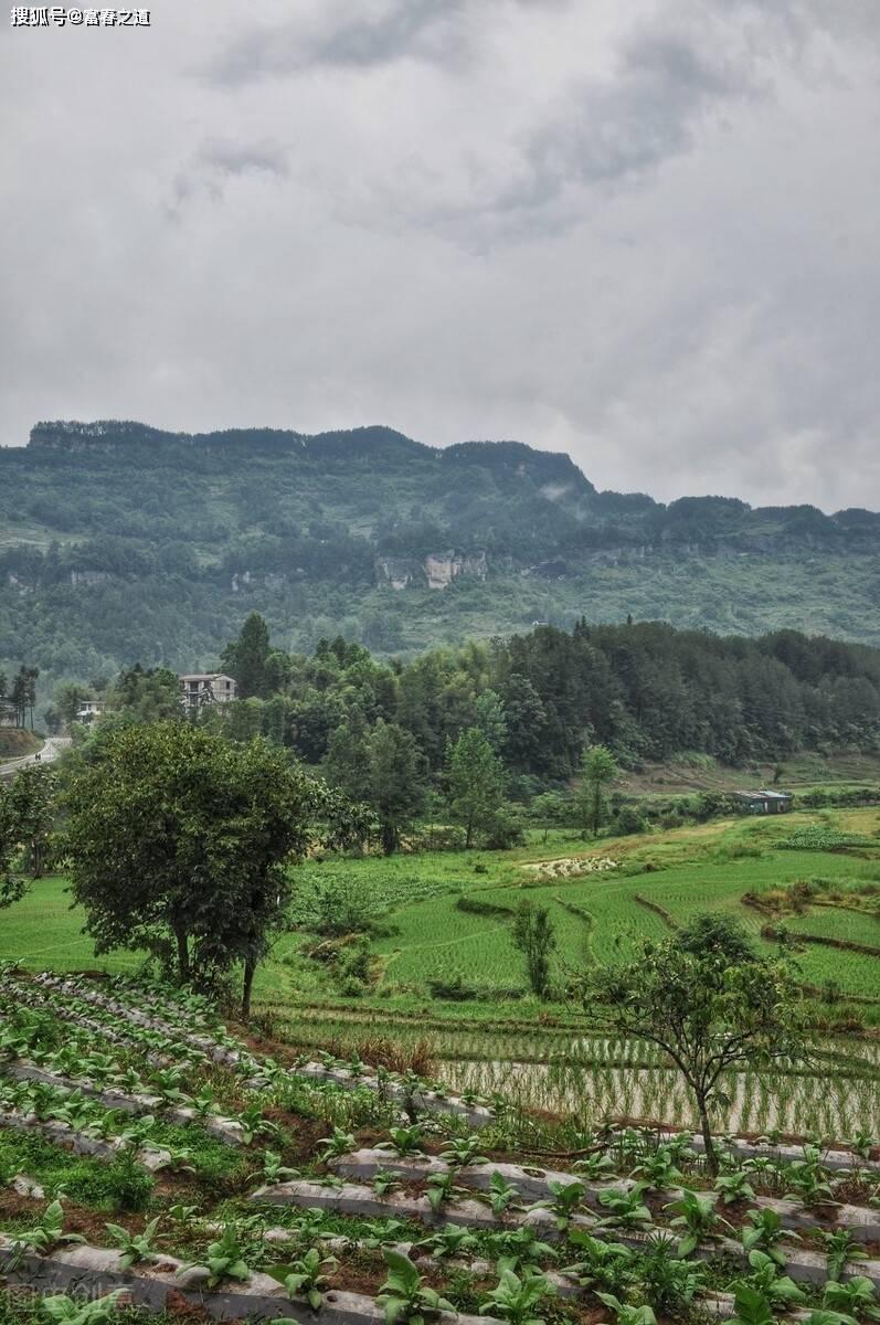 童年的乡土记忆,有天空下的山川草木,还有充满野趣的游虫飞鸟