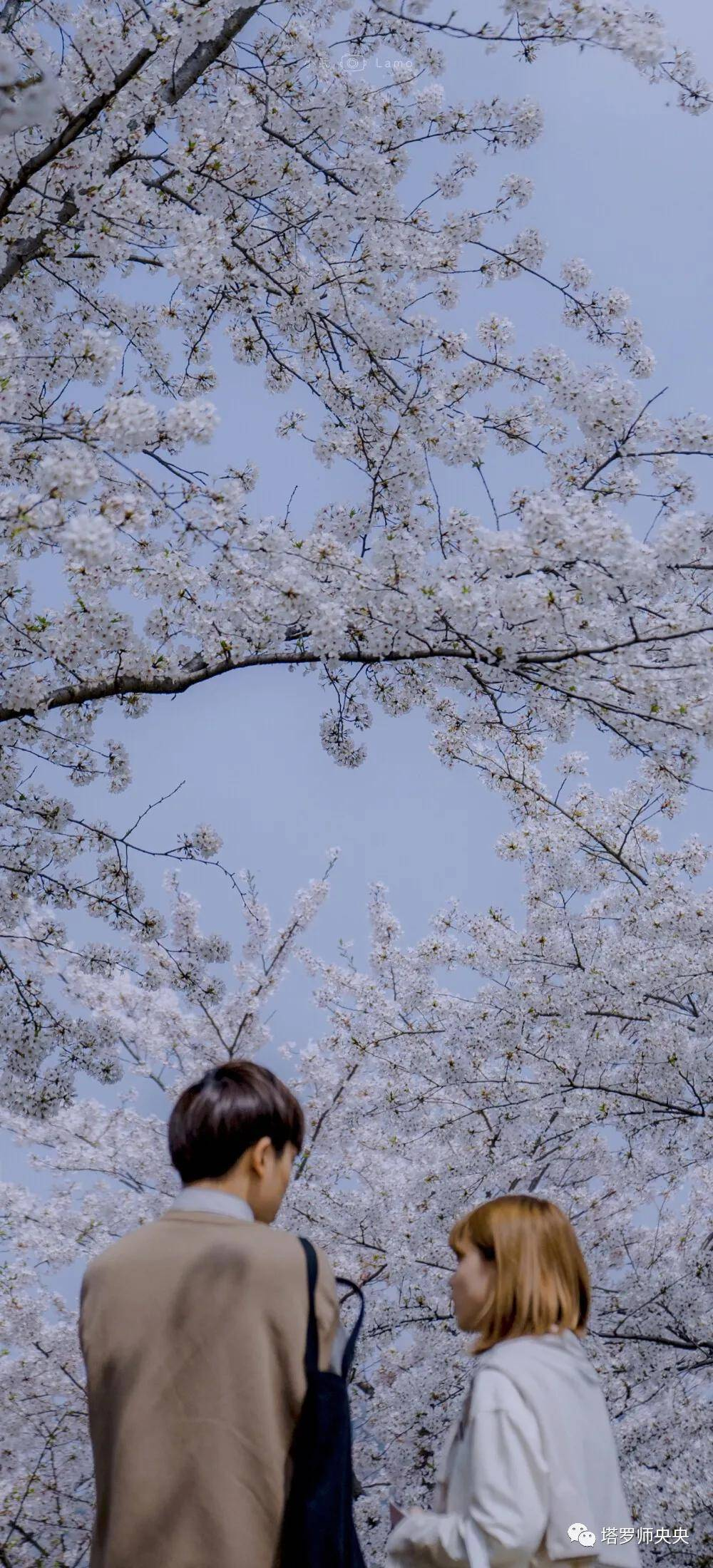 塔罗牌占卜:你桃花缘的巅峰在几月?  第1张