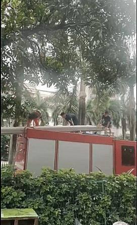 广西一酒店门前树上有蛇,消防都惊动了!
