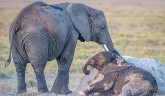 小象宝宝躺地不起,大象妈妈直接拿水泼,请憋住别笑!