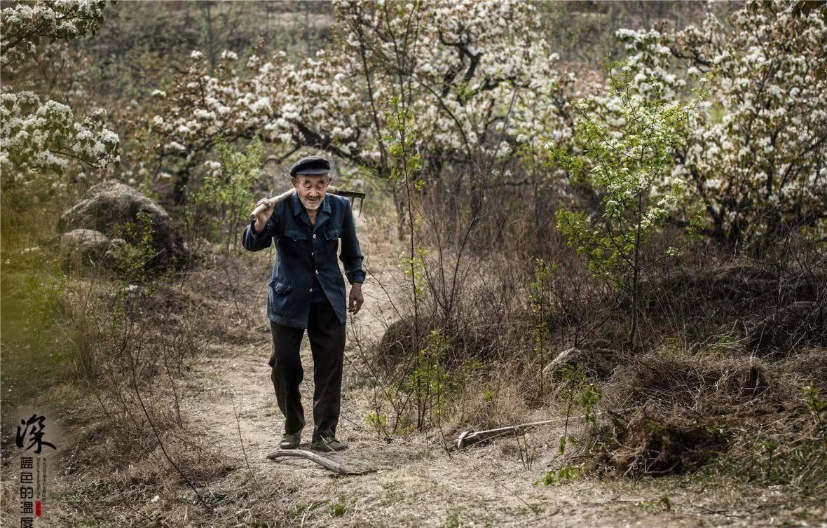 原创             摄影师偶遇八旬山东老汉, 把这座万亩梨园拍成中国最感动的景色