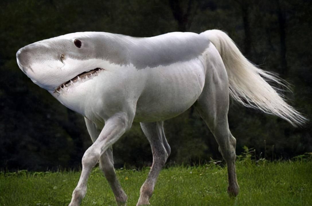 行走的肩章鲨,野心不只是海洋,展示了鲨鱼家族恐怖的进化能力