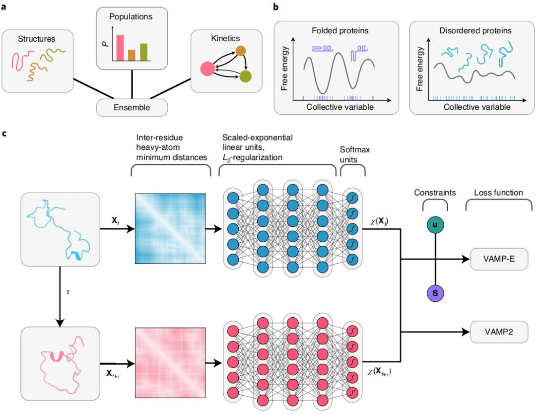 Nat Comm   活体动物神经元蛋白质组快照,更好理解神经系统疾病  神经元是蛋白质吗