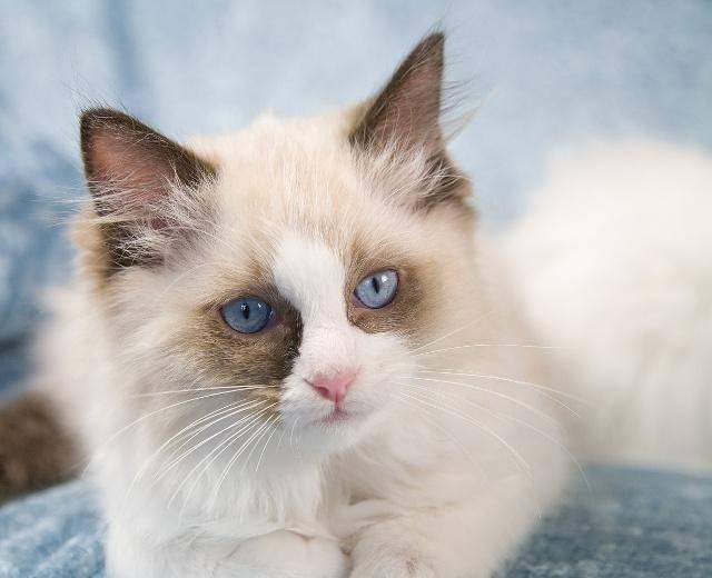 如果想養貓,一定要養這隻貓!