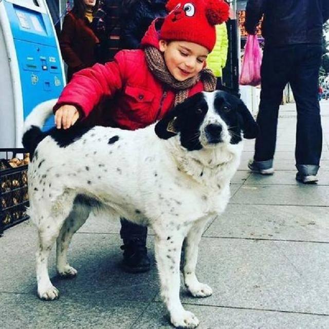 流浪狗因每天護送小朋友,走上狗生巔峰,還被獎勵一套