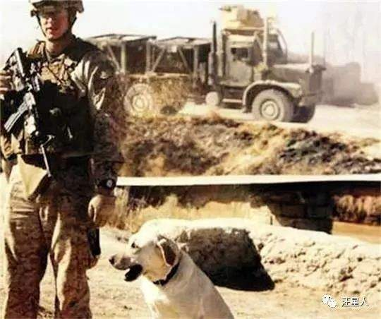 為了曾經許下的承諾,士兵不遠萬里找回當初伴隨他的拉布拉多軍犬