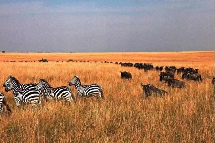 一生中,一定要去非洲看一次动物大迁徙,太壮观了!