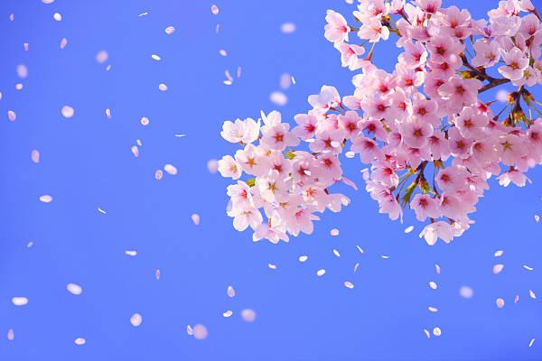 TOWN赏读   林语堂:花只有一点元气,在孤崖上也是要开的