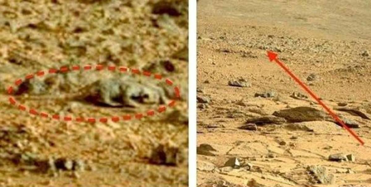 """难道火星早就有生命了吗?机遇号拍到""""蜥蜴"""",这到底是什么?"""