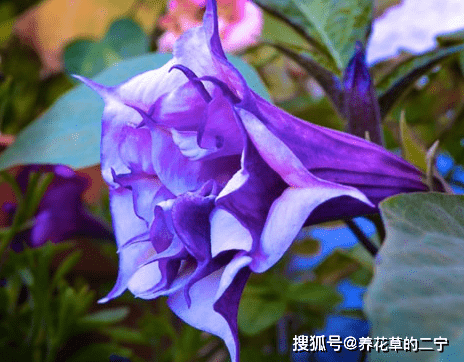 """这""""4种花儿"""",再便宜漂亮也不能在室内养,看看你家养了没"""