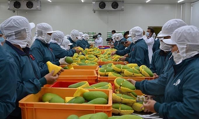今年前4个月,蔬菜水果出口增长超过12%