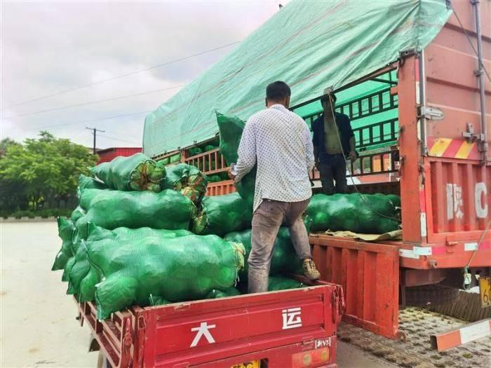 陕西太白县筹集252吨高山蔬菜驰援河南灾区