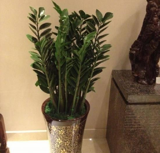 十二生肖养什么植物旺财