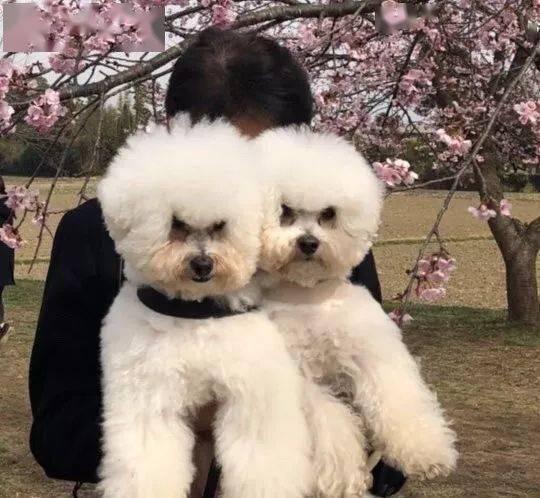 狗子竟然有两副面孔,对不同的家人表现不一样...