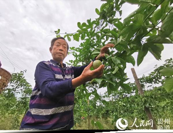 贵州松桃:产业发展农民增收