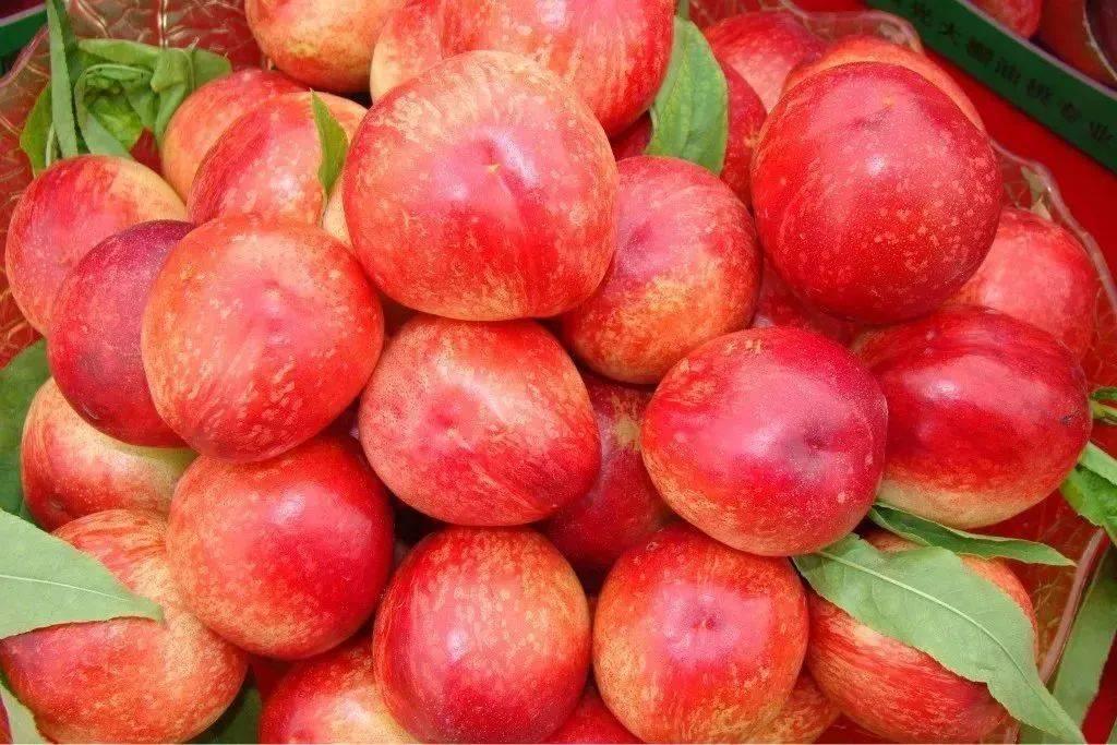喜欢吃油桃的朋友看过来,油桃的5大健康益处你可能不知道!