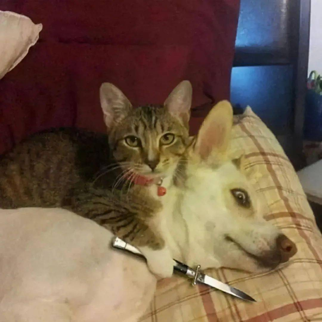 小老弟你不对劲表情包 你不对劲猫猫表情