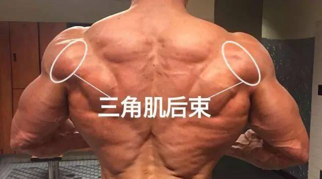 怎么把肩练宽?这就是答案!