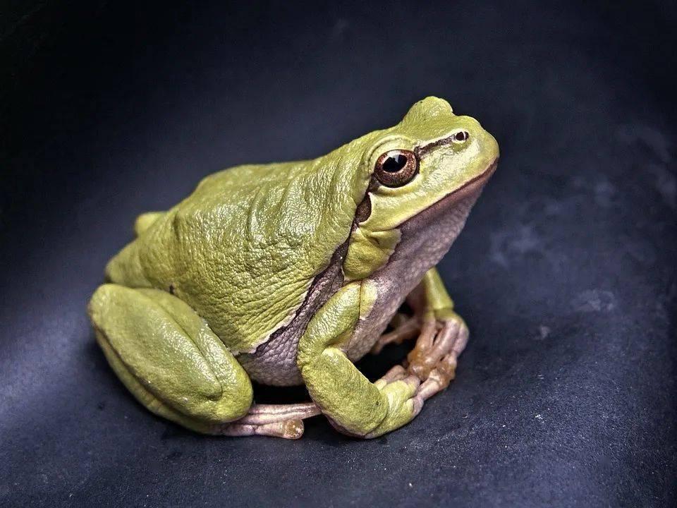 上弦青蛙的跳动原理_青蛙跳动图