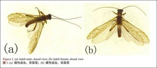 新物种以胡歌、古天乐命名,网友:感觉虫子都变帅了