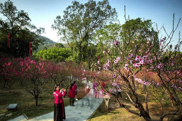 广东各大公园景区成新春旅游热门选择