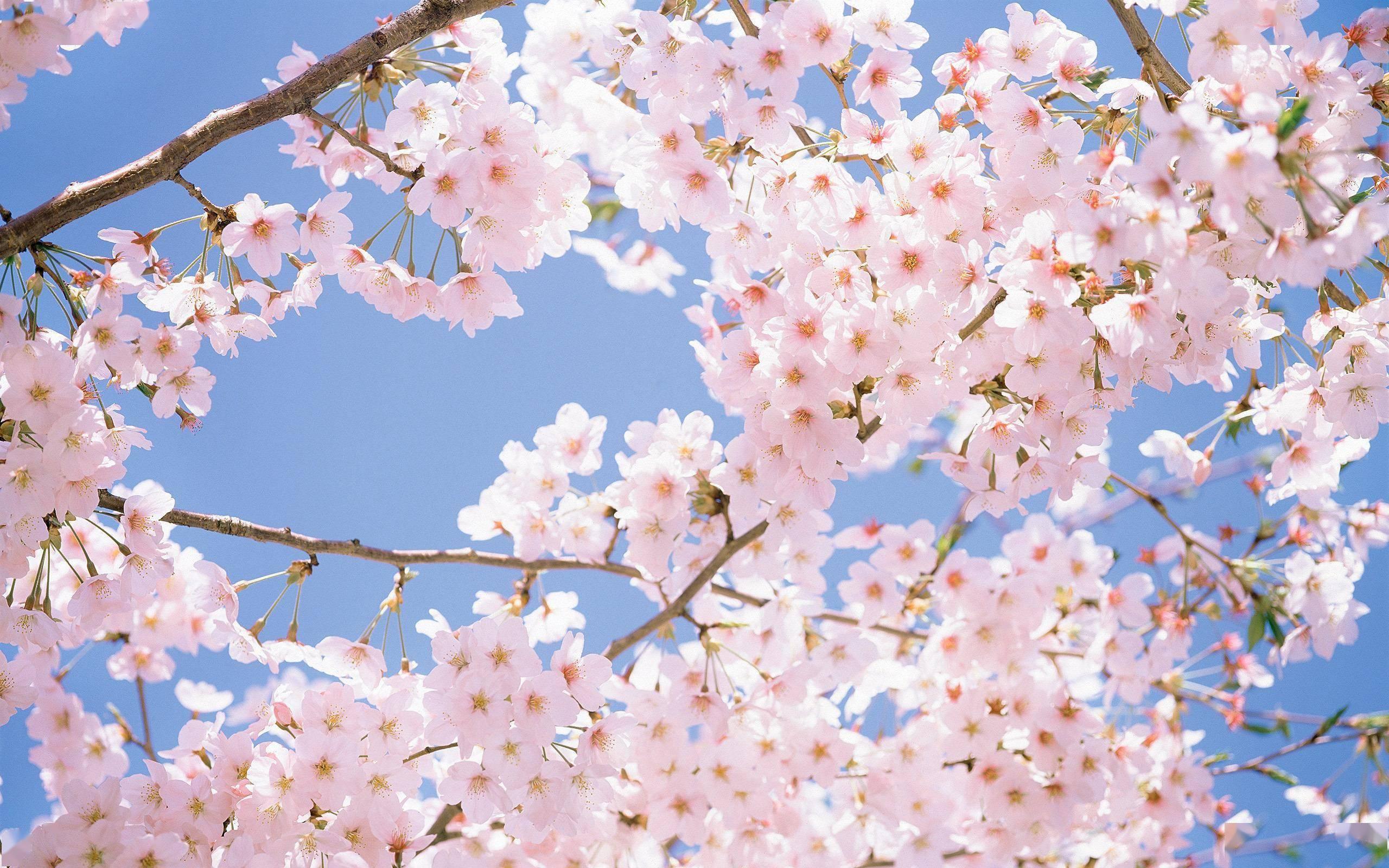 不负春天!海岛、赏花、古城... 总有一款适合你~