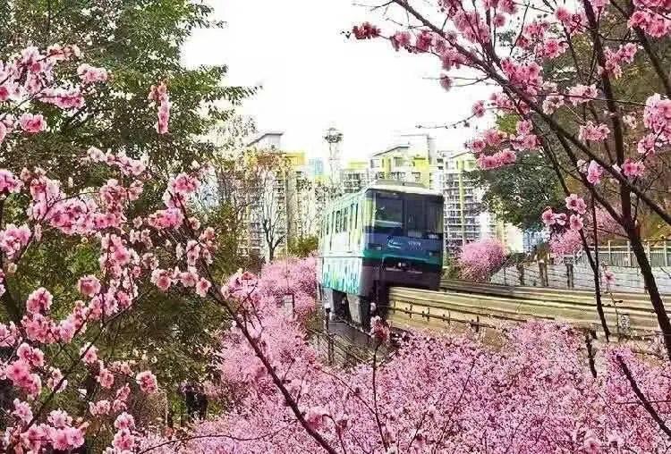 趁春色正好一起出去走走吧!中心城区赏花地图拿走不谢