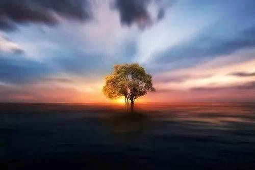 [诗歌之声]我骄傲,我是一棵树