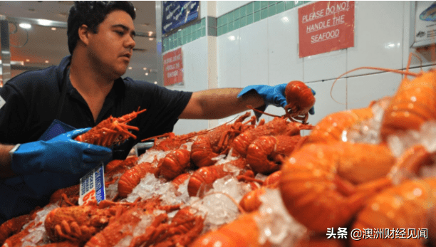 国内市场寻出路,澳洲最贵龙虾砍价70%求卖光