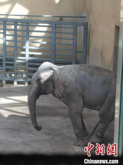 大象疑抑郁引热议 太原动物园称系刻板行为