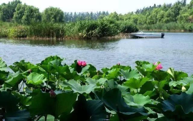 这个又大又美的滨河森林公园,让您有一种重返自然的感觉!关键还免费!