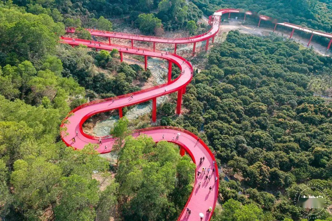 """免费开放!深圳这条4千米""""红飘带""""不要太火!能看还能玩!"""