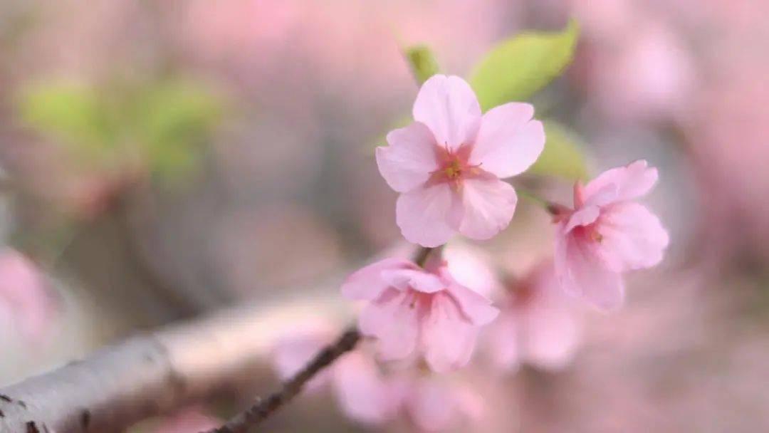 一世独尊:三月,请把日子过成一首诗 网络快讯 第4张