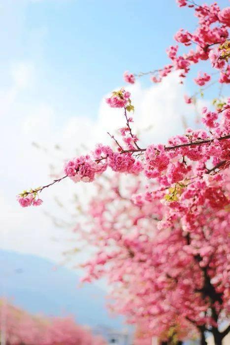 三寸人间:桃花依旧笑春风 网络快讯 第2张