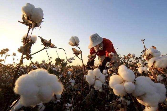 """惹众怒!H&M之后,耐克、阿迪也""""爆""""上热搜!新疆棉发威!纺织服装批量涨停"""