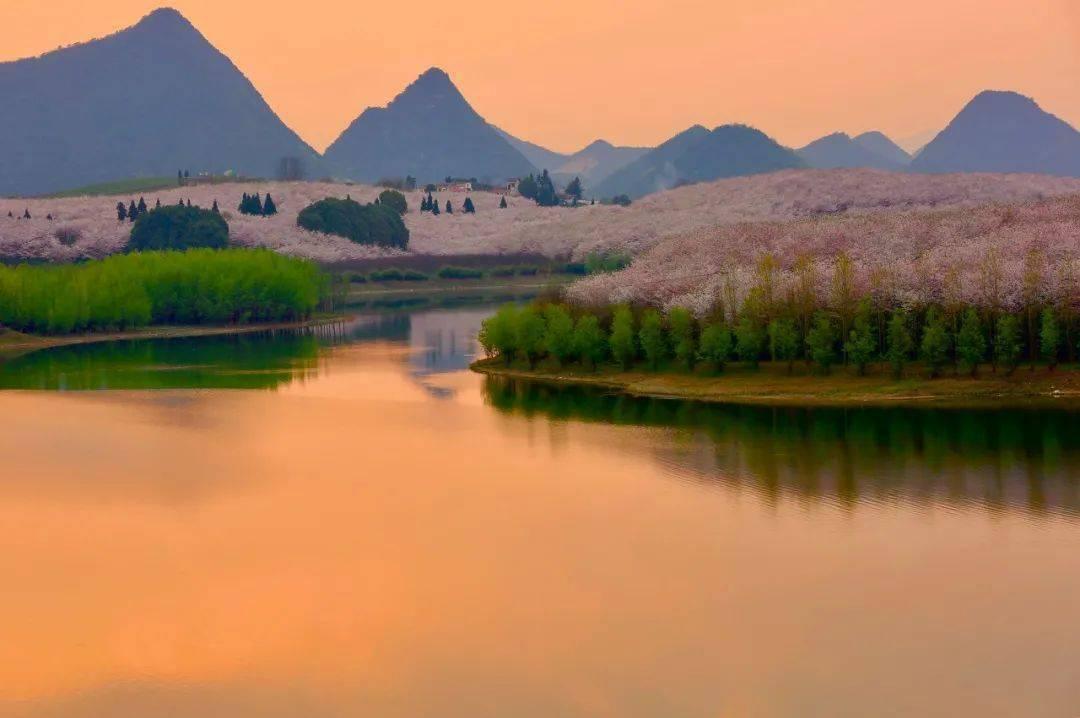 美过日本,不输武汉,全球最大的樱花基地竟在中国,还免费! (图27)