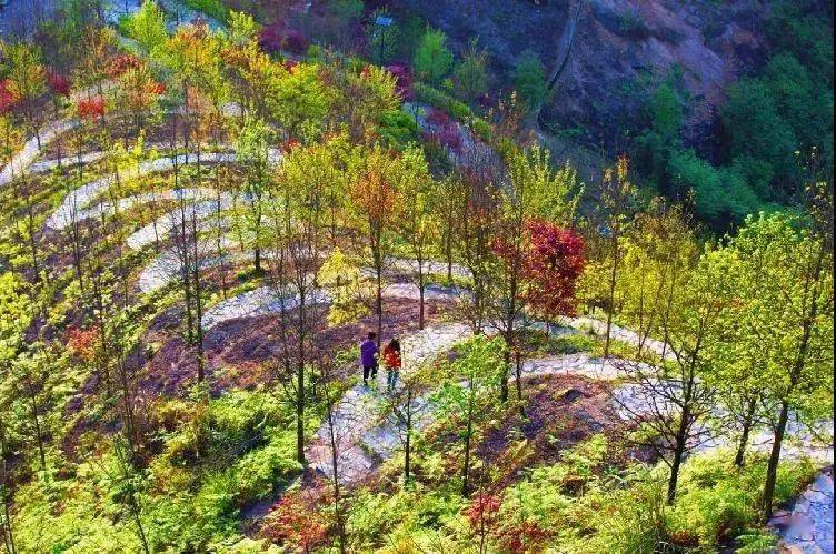 彩色森林一大波福利来袭,清明假期约起来!